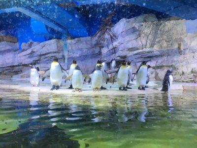 Tierisch was los im Münchner Zoo
