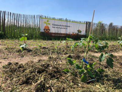 2. Pflanzung am Gemüseacker